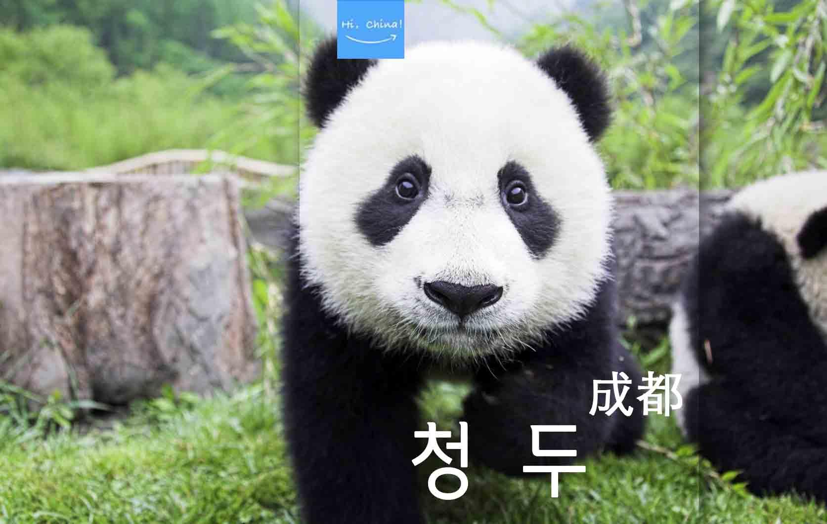 Hi,China 청두